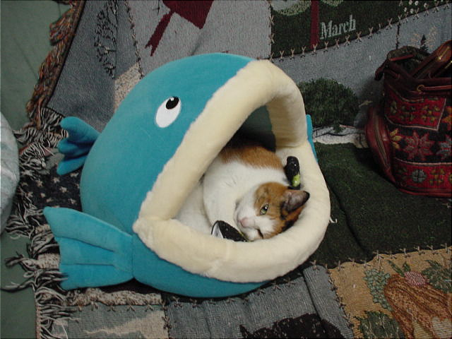 fish shaped cat bed 1