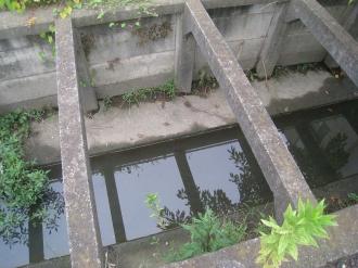 サライ通りの用水路を覗く