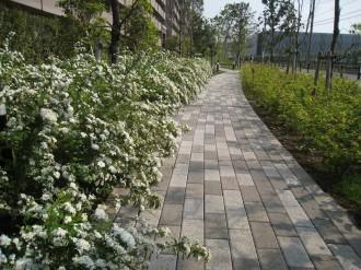 ガーデンティアラ武蔵小杉の公開空地(西側)
