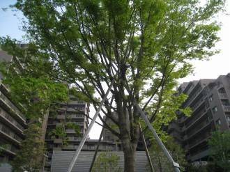 公開空地からのガーデンティアラ武蔵小杉